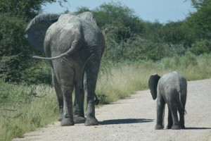Namibia 2009