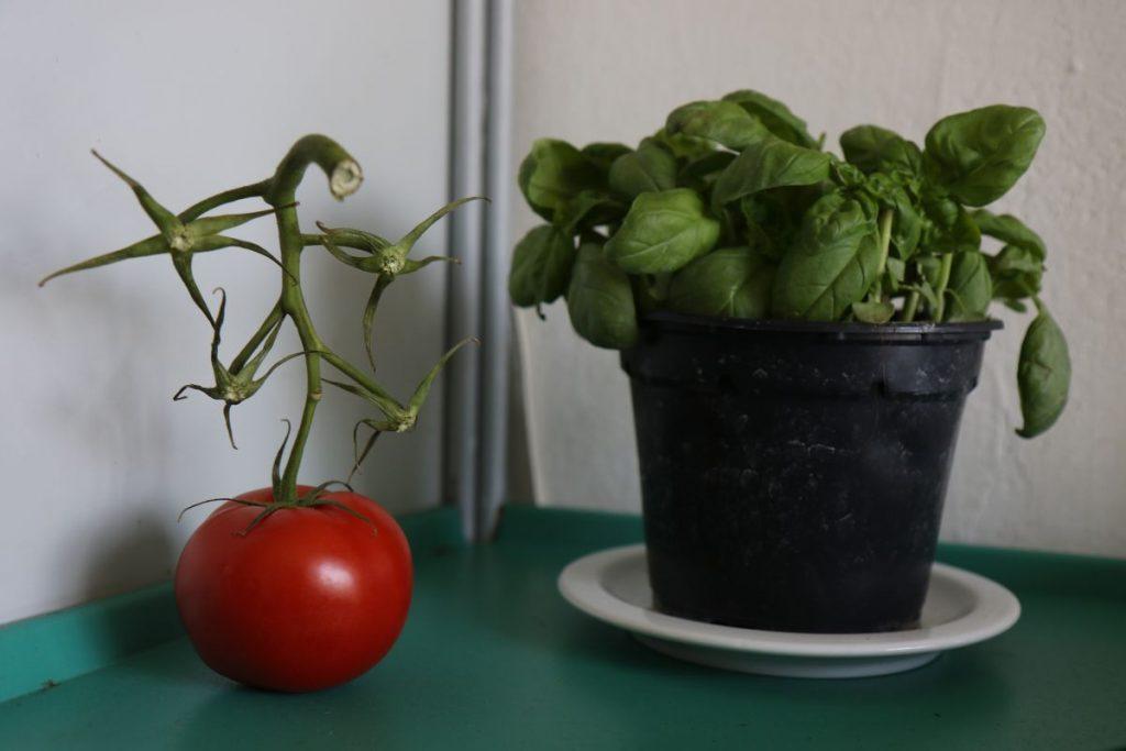 Bild mit ohne Tomaten