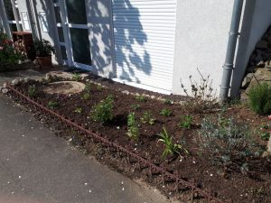 Vordergarten komplett neu bepflanzt