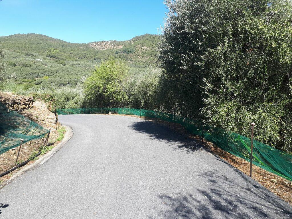 Olivennetze für die Ernte