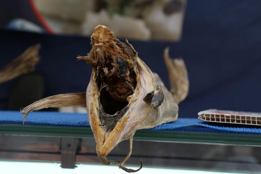 Dem Fisch mal ins Maul geschaut ...
